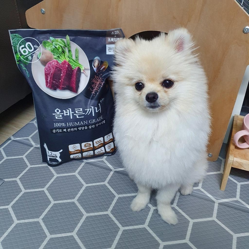 올바른끼니 전연령용 소고기 초록잎홍합 관절강화 강아지 소프트사료 1.2kg  리뷰 후기